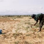 Frau arbeitet auf verdorrtem Feld in Niger. Foto: Isabelle Eshraghi
